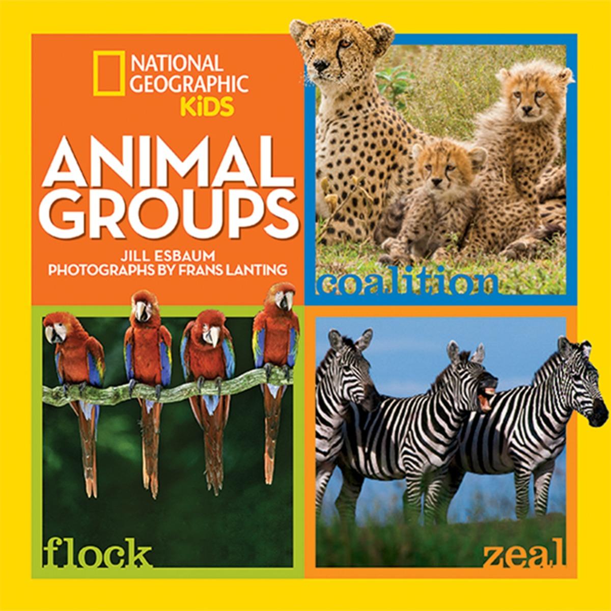 ESBAUM, JILL ANIMAL GROUPS 38 parrots
