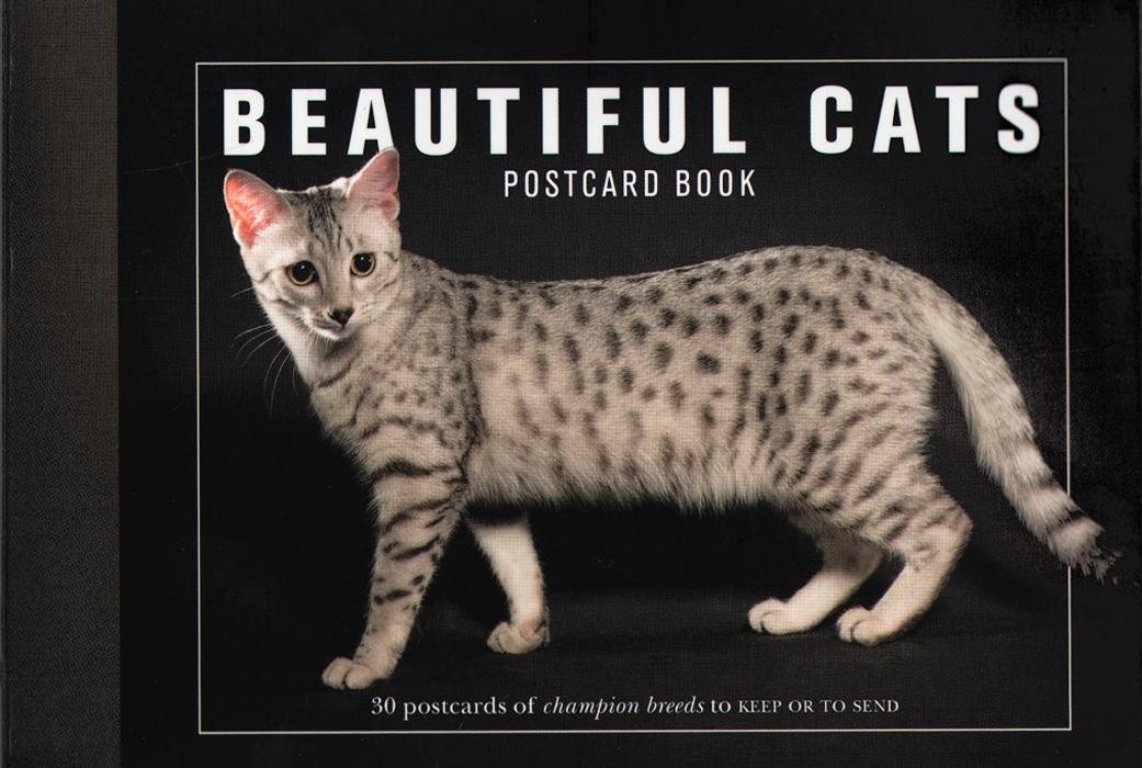 Beautiful Cats: Postcard Book