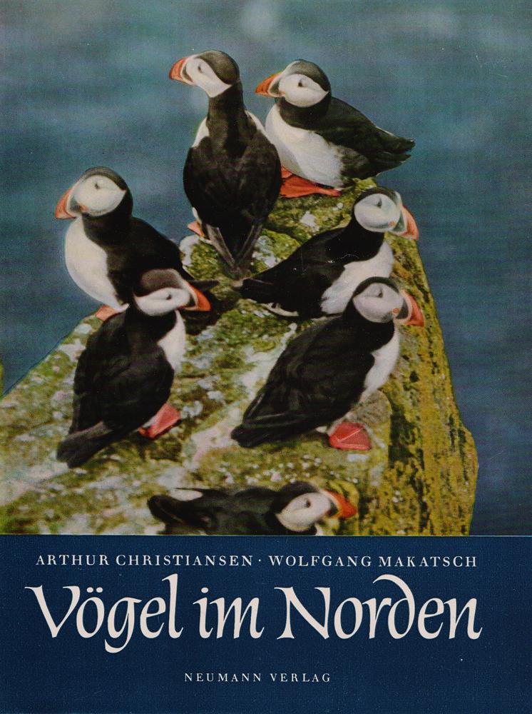 Vogel im Norden