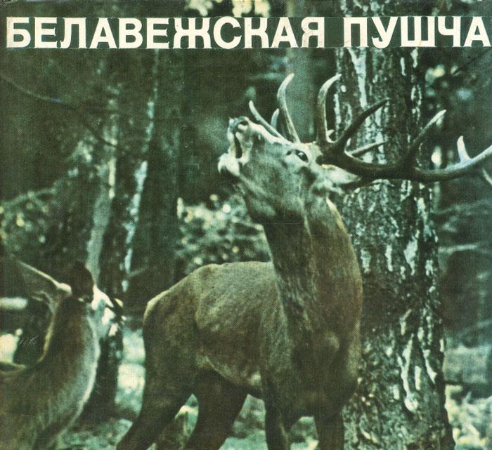 Беловежская пушча / Беловежская пуща