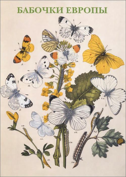 Бабочки Европы. Открытки