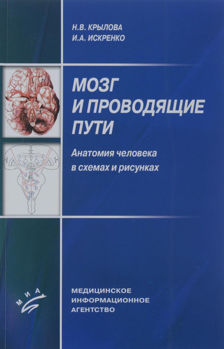 Мозг и проводящие пути. Анатомия человека в схемах и рисунках. Учебное пособие ( 978-5-8948-1966-2 )