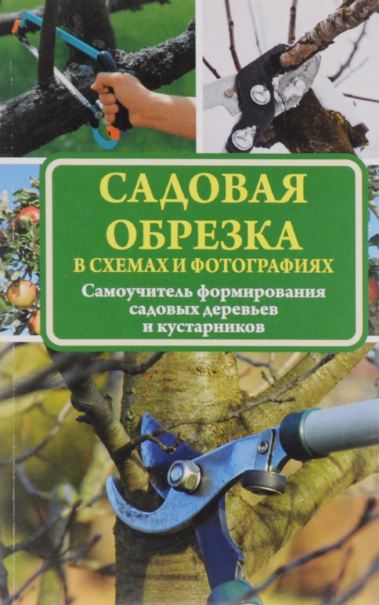 Садовая обрезка в схемах и фотографиях. Самоучитель формирования садовых деревьев и кустарников