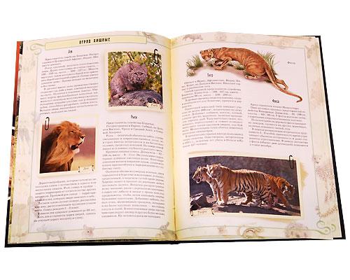 В мире животных. Млекопитающие