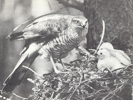 Птицы перед микрофоном и фотоаппаратом