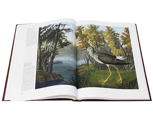 Птицы Америки (эксклюзивное подарочное издание)