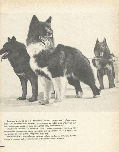 Служебное и охотничье собаководство