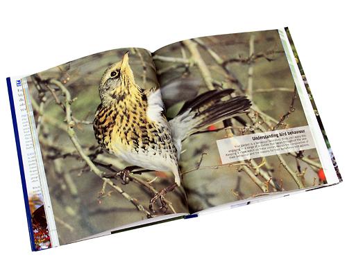 Birdfeeder Guide