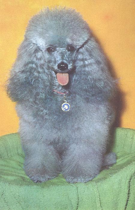 Das Grosse Hundebuch
