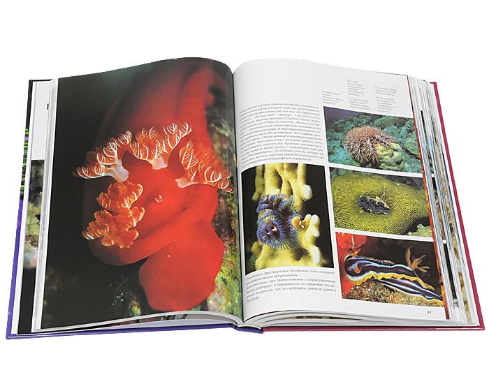 Подводное царство. Красное море, Мальдивские острова, Малайзия, Карибское море