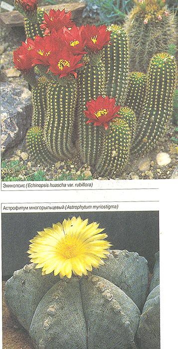 Комнатные растения. Мини-энциклопедия