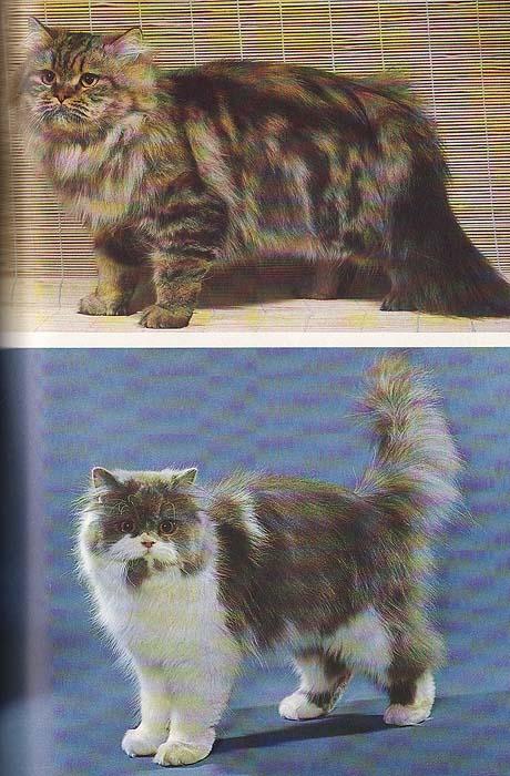 Lexikon der Katzenhaltung