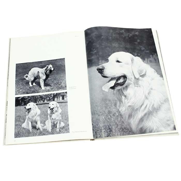 Hunde: Schonheit und Leistung