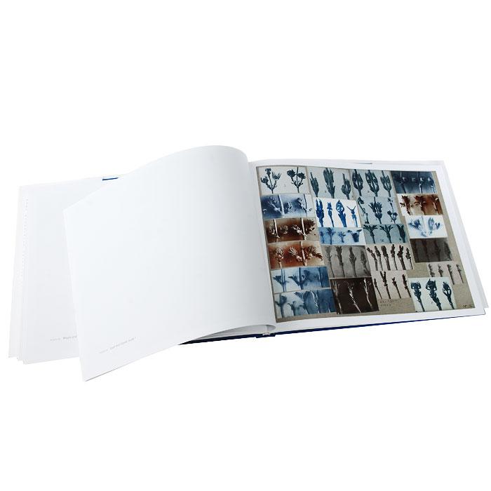 Karl Blossfeldt: Working Collages