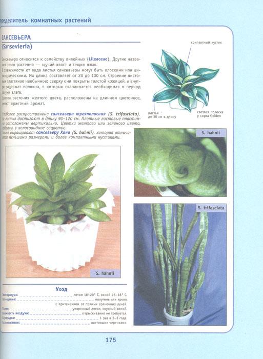 Комнатные растения в вашем доме. Новый энциклопедический справочник