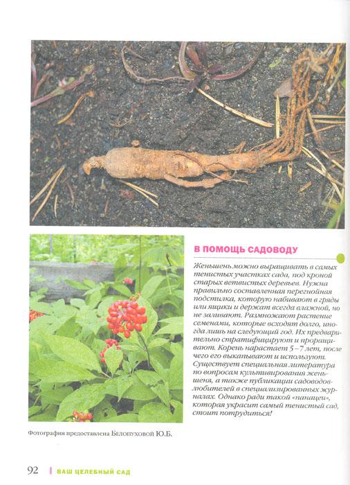 Лекарственные растения в Вашем саду. Большая иллюстрированная энциклопедия