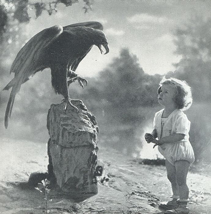 С кинокамерой в таинственном мире птиц и зверей