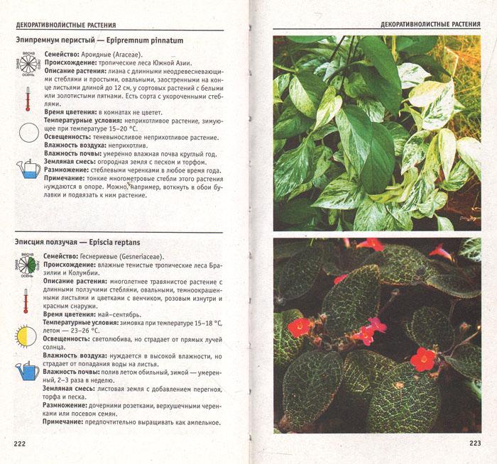 Атлас комнатных растений. 300 самых распространенных видов