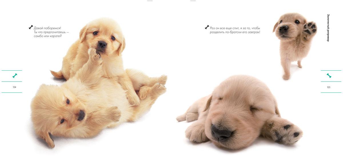 Собаки. Породистые проказники