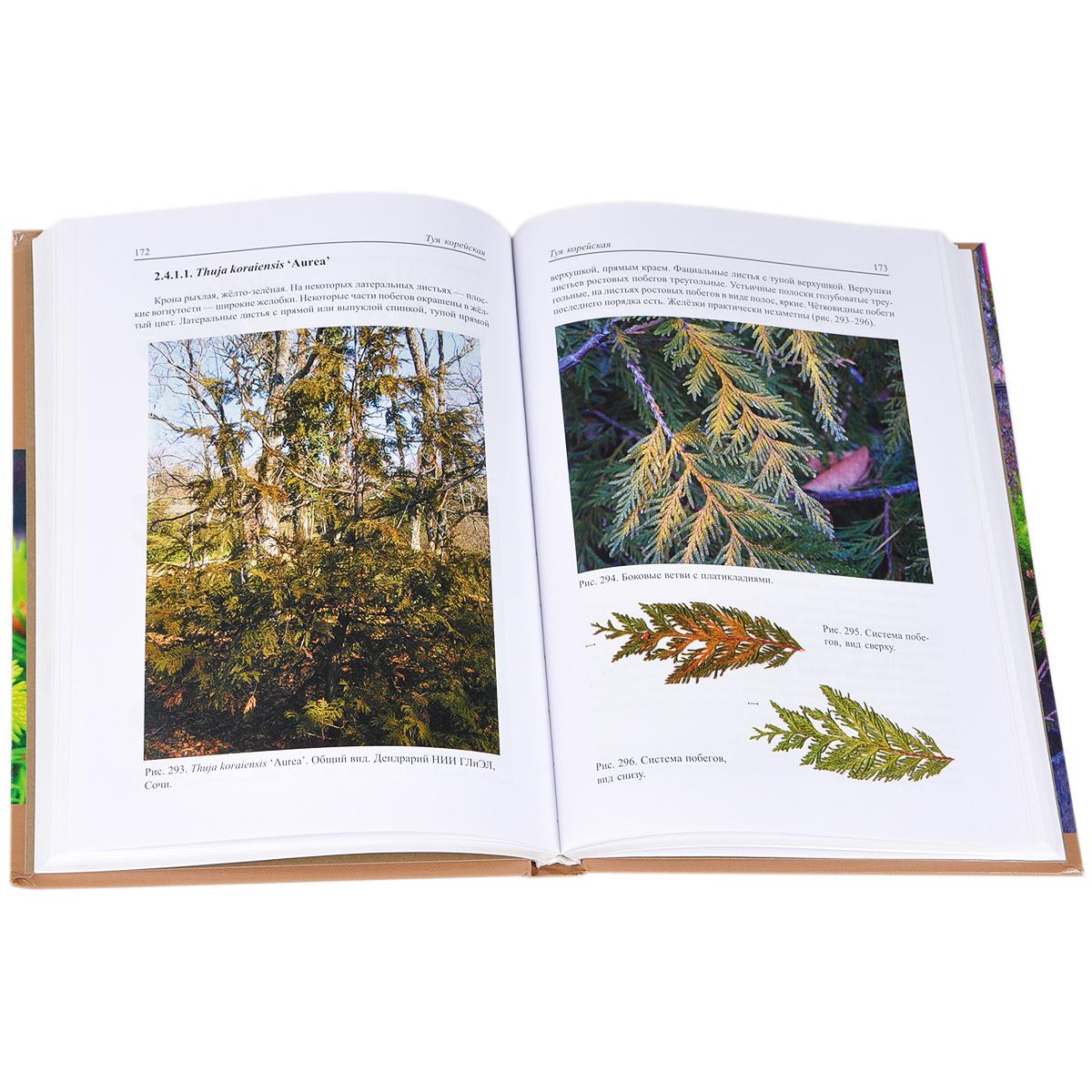 Виды и формы хвойных, культивируемые в России (комплект из 2 книг)