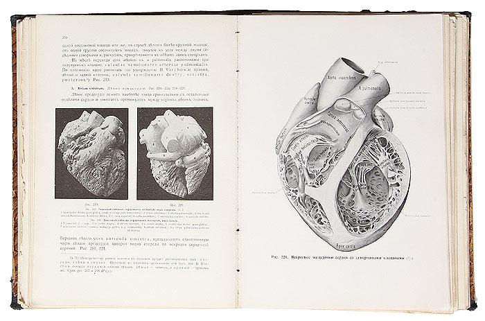 Руководство анатомии человека. В 6 томах (комплект)