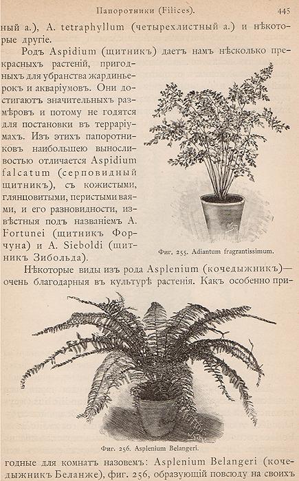 Комнатное садоводство. Уход за комнатными растениями, их выбор и размножение