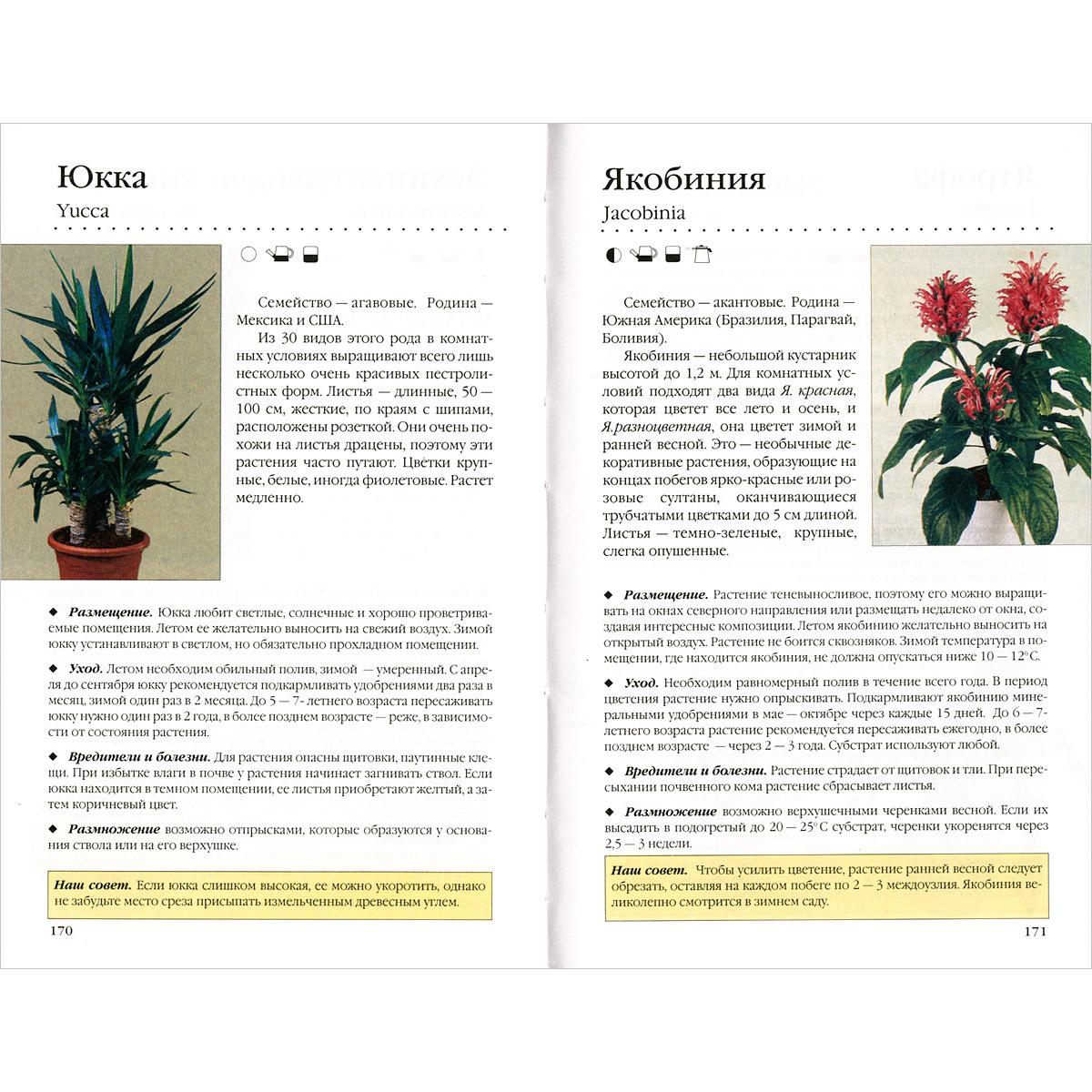 Комнатные растения. Новое руководство по уходу