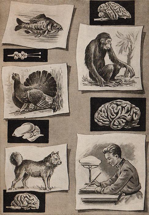 Миф о душе: Современная наука о психической деятельности человека