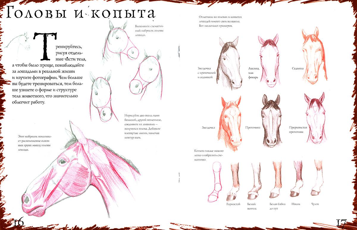 Лошади. Тематические уроки