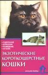 Экзотические короткошерстные кошки. Стандарты. Содержание. Разведение. Профилактика заболеваний