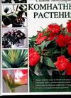 Самые популярные комнатные растения