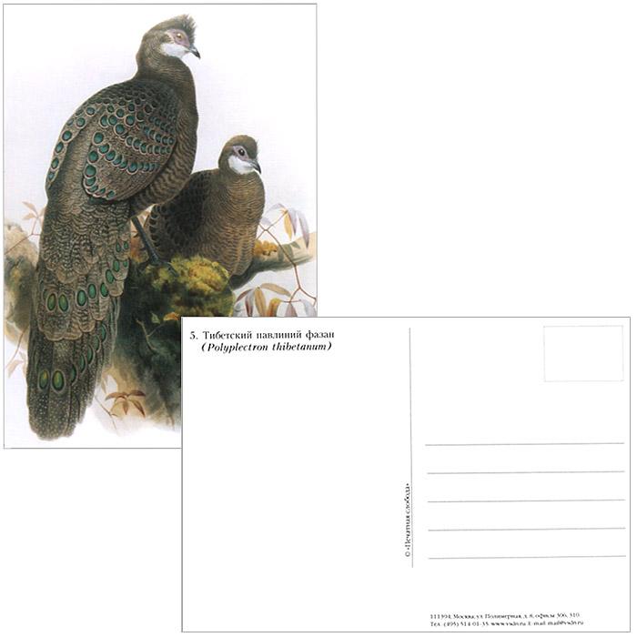 Фазановые (набор из 15 открыток)