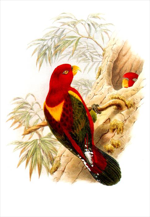 Птицы Новой Гвинеи. Набор открыток