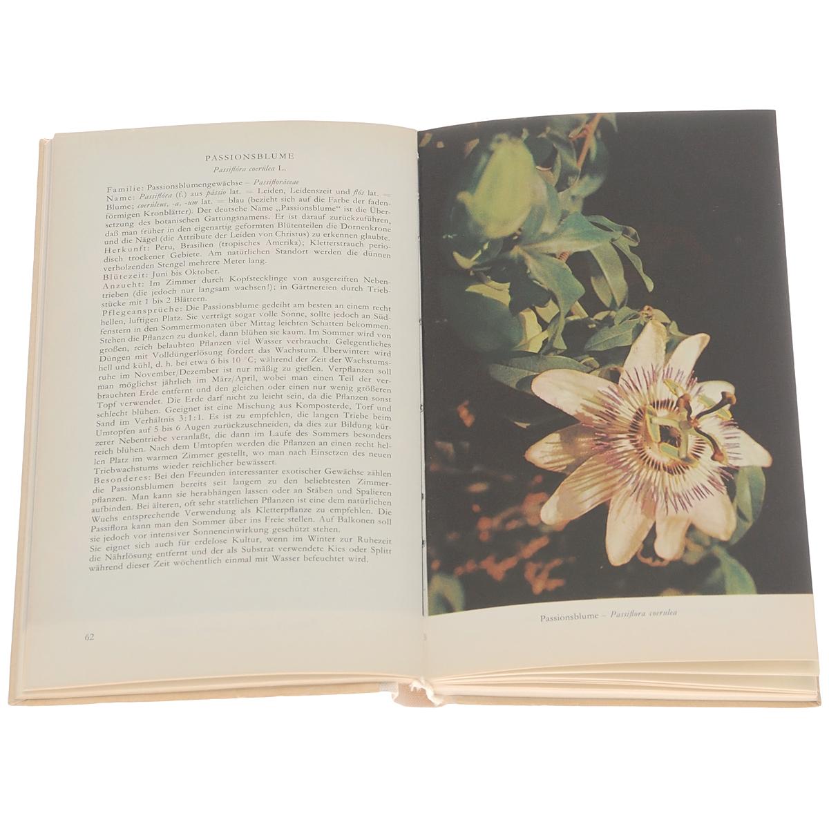 Taschenbuch der Zimmerpflanzen
