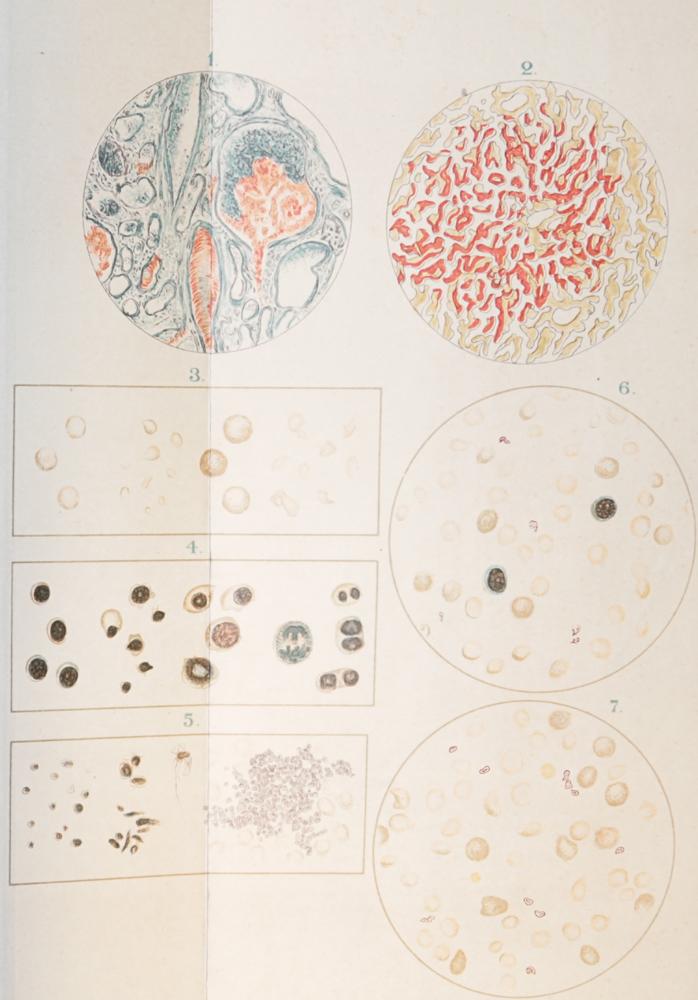 Основы общей и экспериментальной патологии. Руководство патологической физиологии для студентов