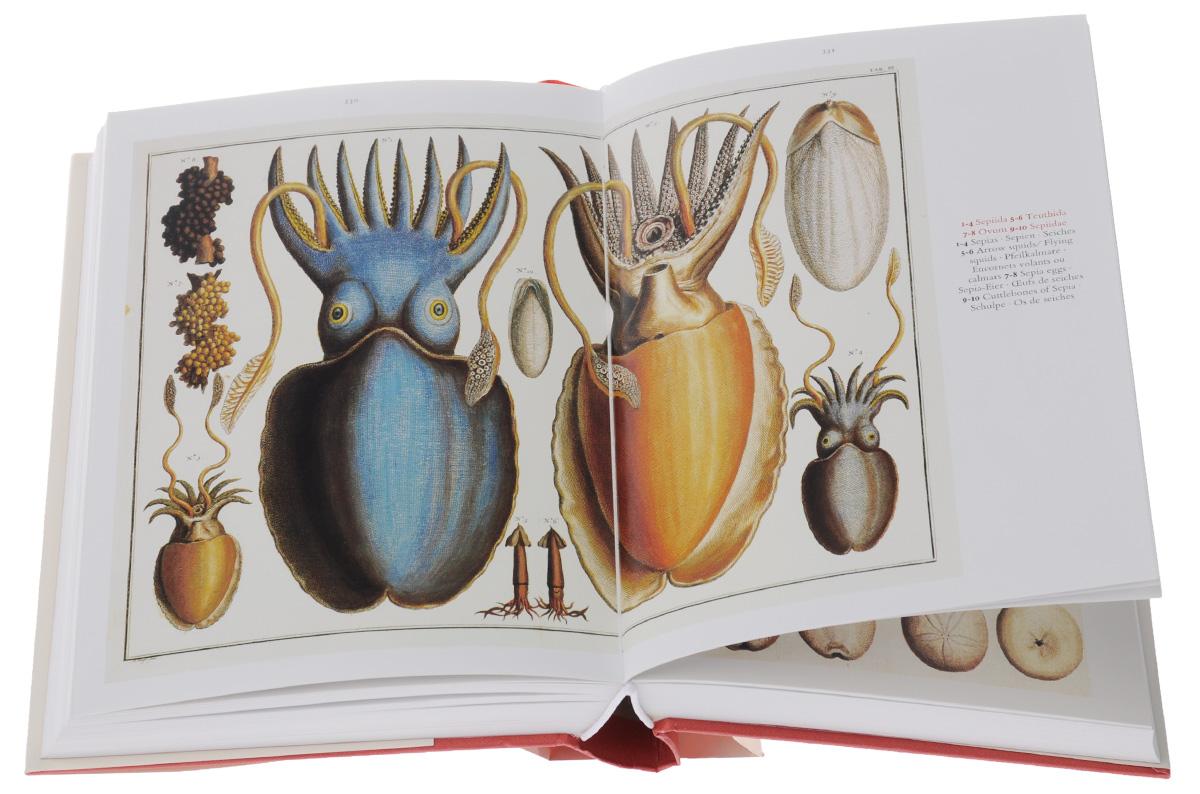 Cabinet of Natural Curiosities / Das Naturalienkabinett / Le cabinet des curiosites naturelles