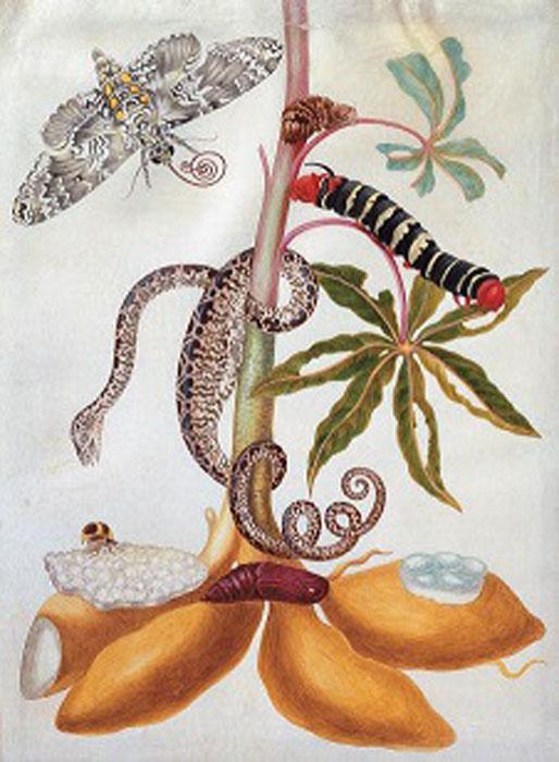 Удивительные редкие создания. Как познавался мир