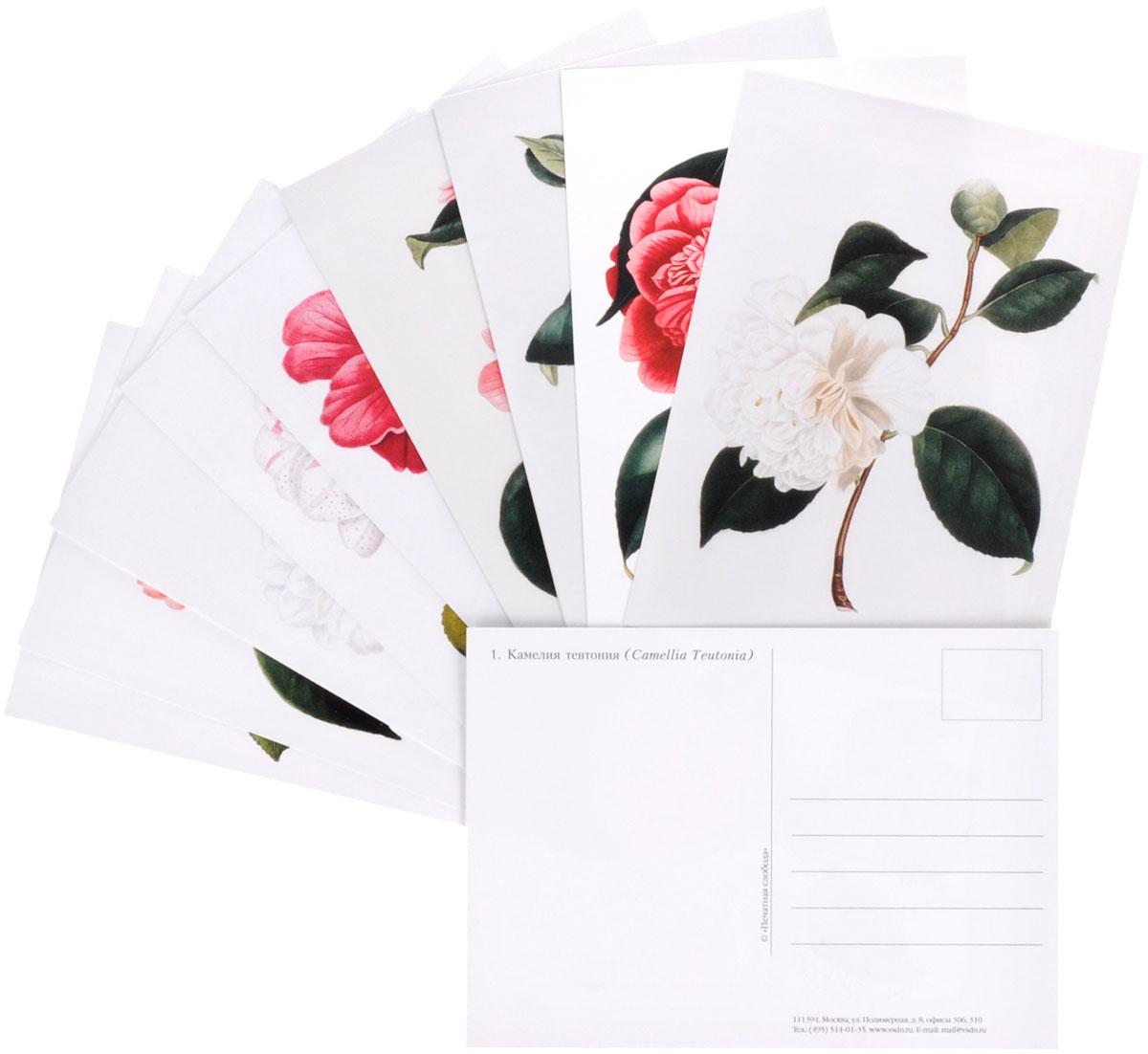Камелии (набор из 15 открыток)