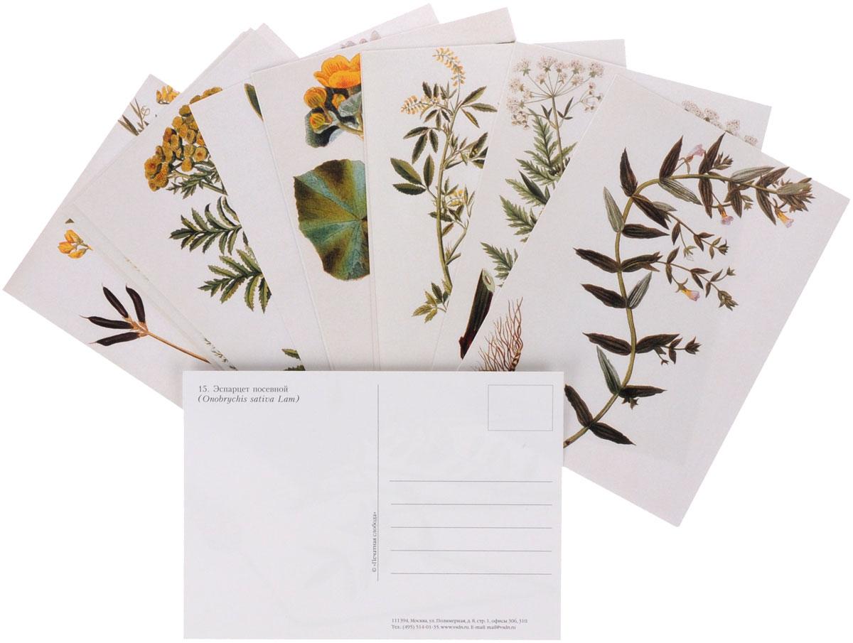 Луговые травы (набор из 15 открыток)