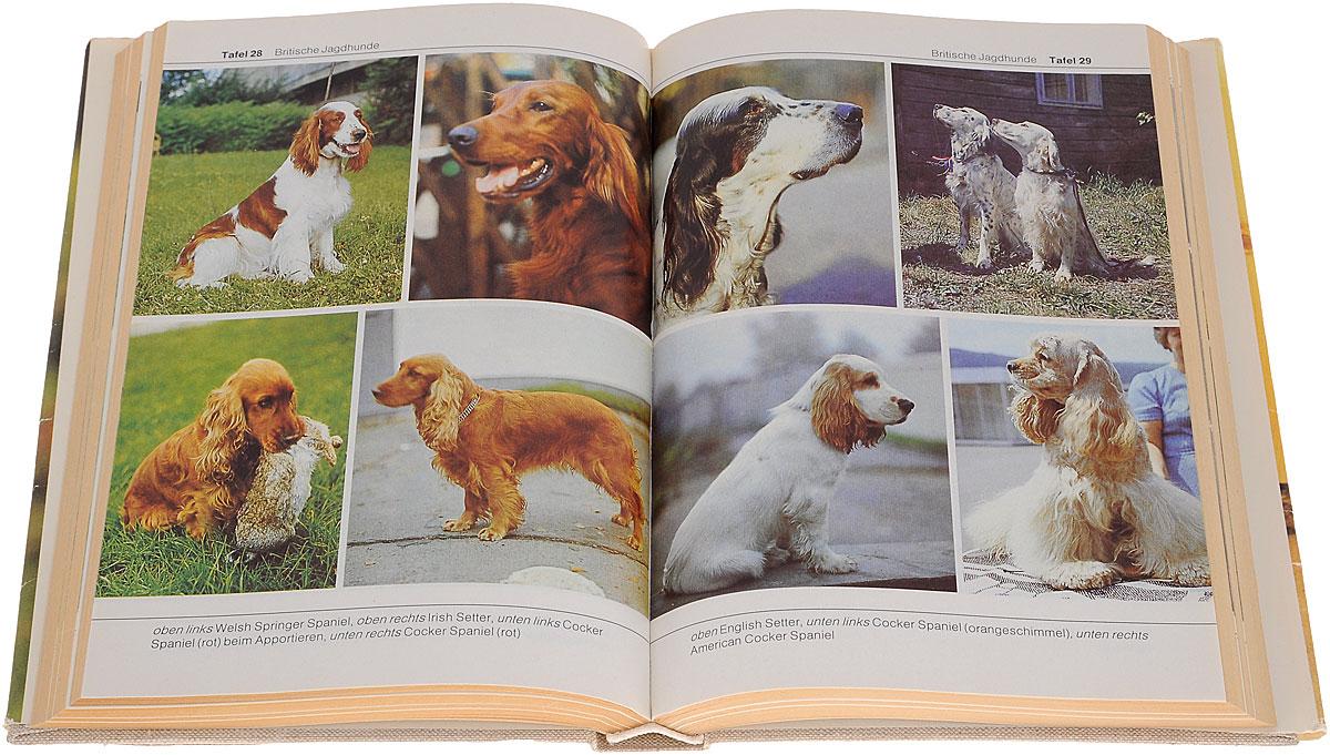 BI-Lexikon: Hunderassen