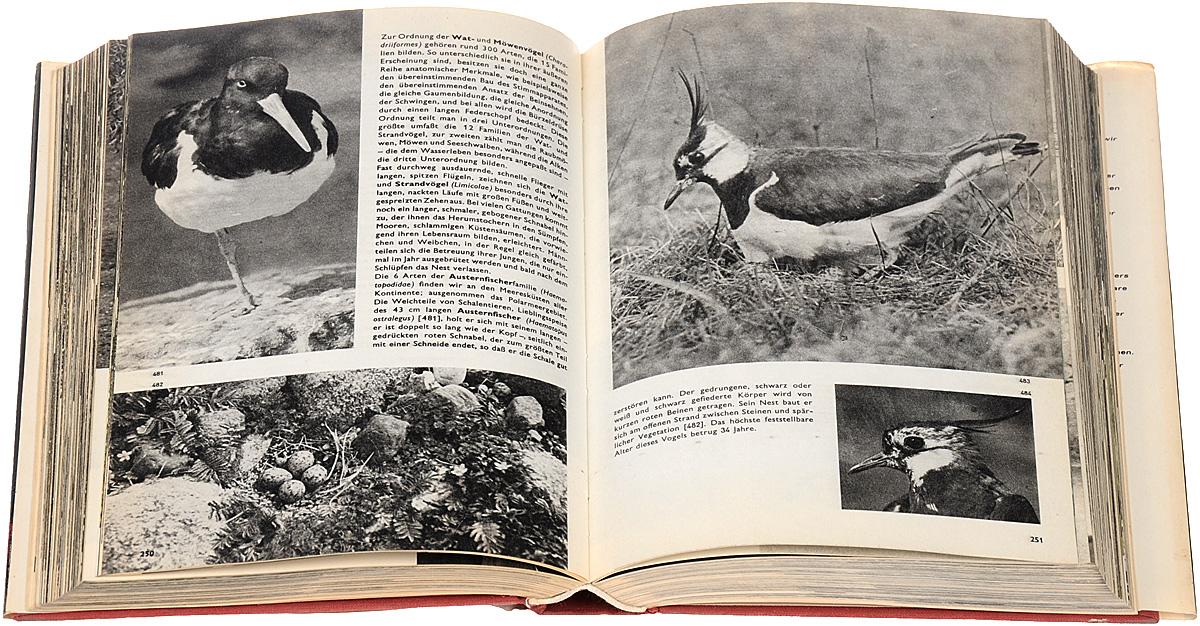 Das grosse bilderlexikon der vogel