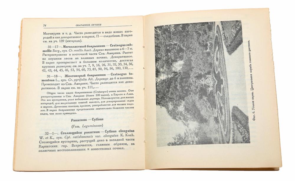 Парк Ботанического института Академии наук СССР. Краткое описание дендрологической коллекции