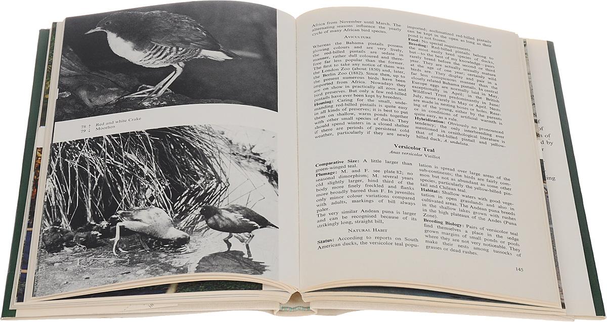 Ornamental waterfowl