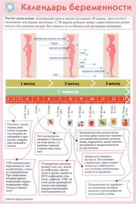 Беременность календарь декрета