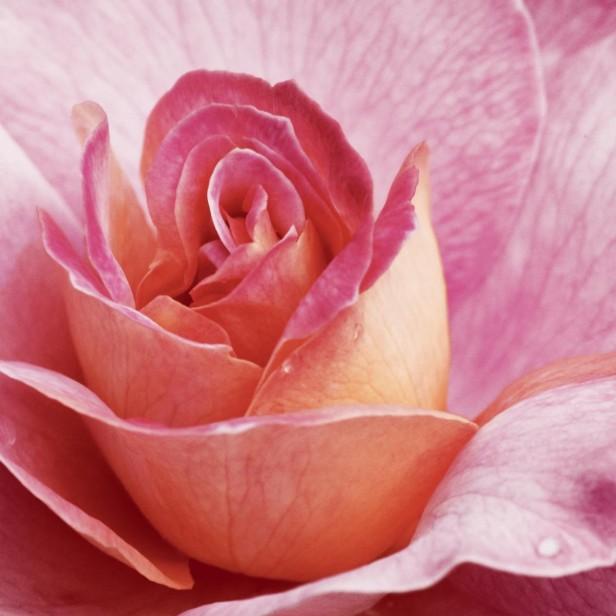"Салфетки Lambi ""Роза"", трехслойные, 33 х 33 см, 20 шт"