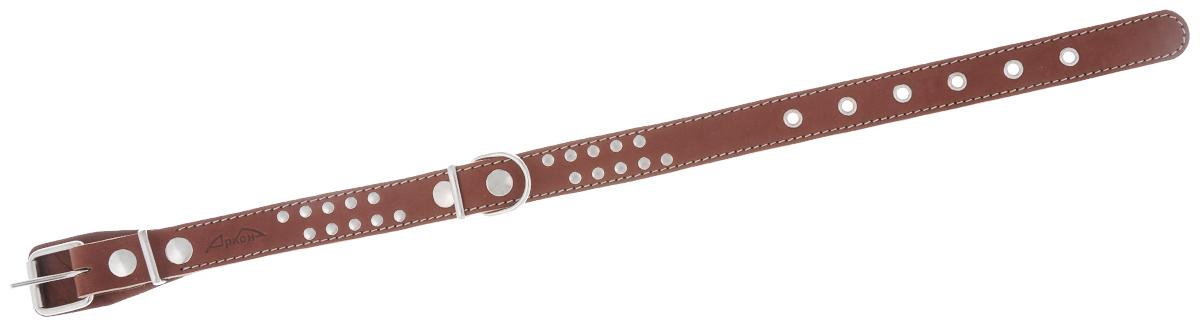"""Ошейник Аркон """"Стандарт"""", цвет: коньячный, ширина 2,5 см, длина 57 см"""