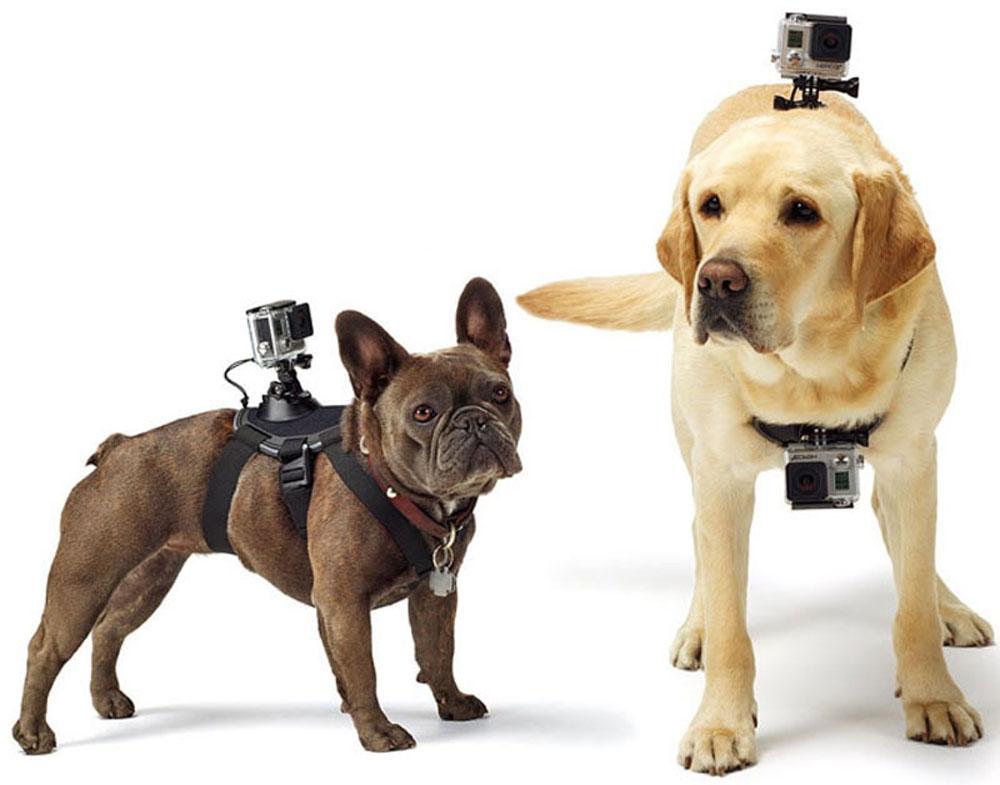 Eken GP197 крепление для собаки с держателем для камер GoPro, Eken
