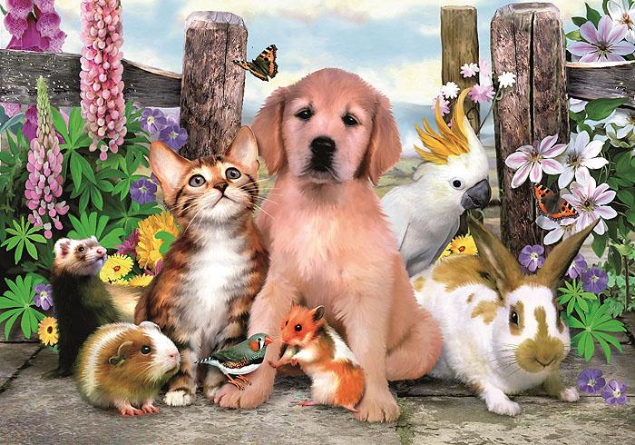 Картинки домашние кошки