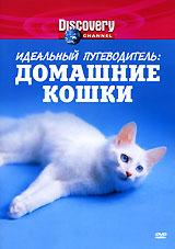 Discovery: Идеальный путеводитель: Домашние кошки
