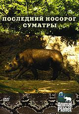 Animal Planet: Последний носорог Суматры